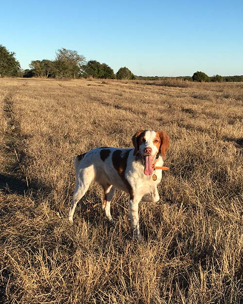 Julie Zimmerman Morris image 4 - Associate with Texas Ranch Sales LLC