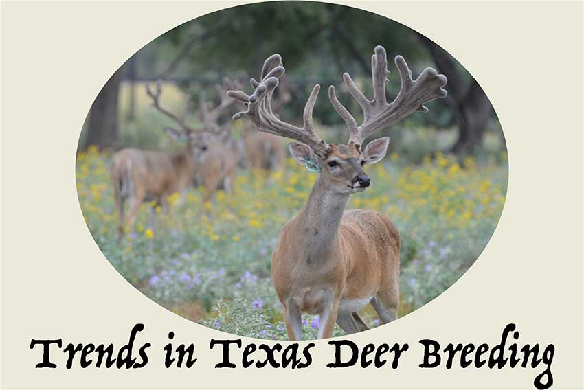 Trends in Texas Deer Breeding