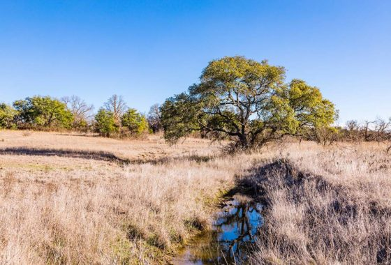 Brownwood Estates 10 Acre Ranch Brown County Tract 9 Image 3