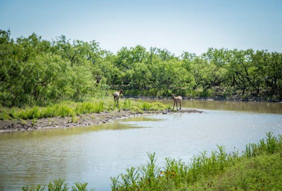 Lucky 7 Ranch 2500 Acre Ranch Concho County Image 13