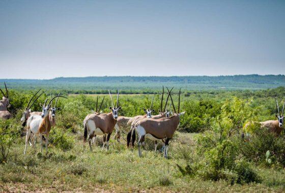 Lucky 7 Ranch 2500 Acre Ranch Concho County Image 17