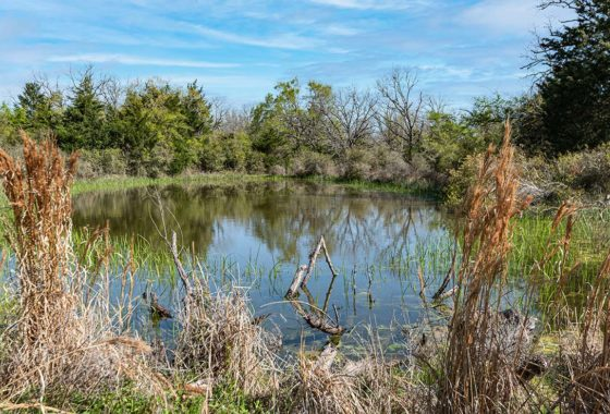 The Turner Ranch 201 Acre Ranch Leon County Image 1
