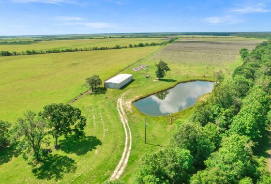 Gulf Coast Olive Investments 120 Acre Ranch Liberty County Image 18