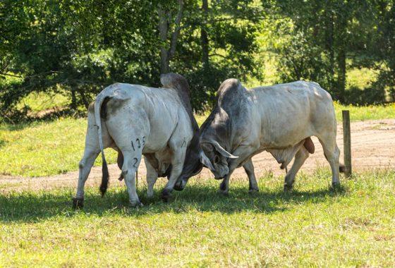 R & W Ranch 546 Acre Ranch Sabine County Image 4