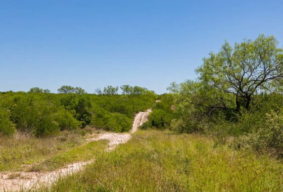 Guajillo Hill 165 Acre Ranch Uvalde County Image 2