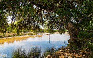 Mountain River View Ranch photo