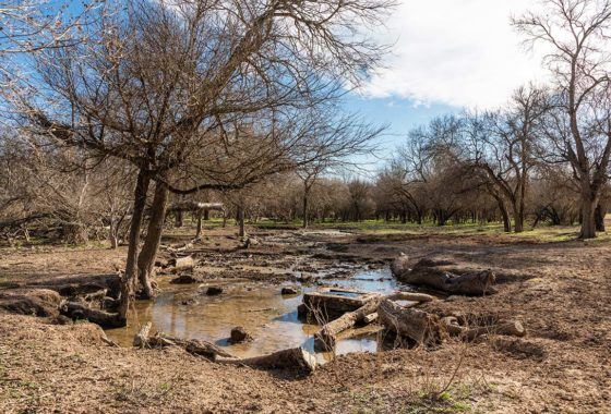Sabinal River Ranch 600 Acre Ranch Uvalde County Image 2