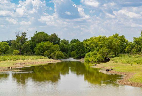 Hidden Springs Ranch 175 Acre Ranch Atascosa County Image 1