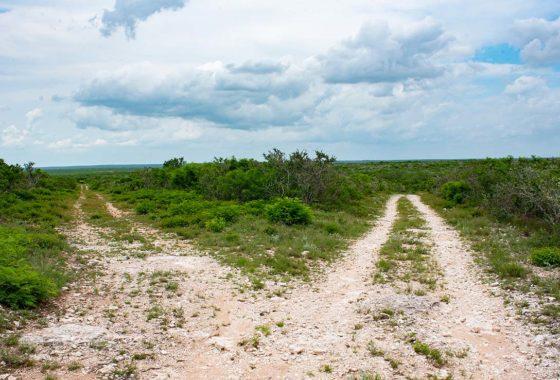 Cenizo Hills Ranch 169 Acre Ranch Duval County Image 2