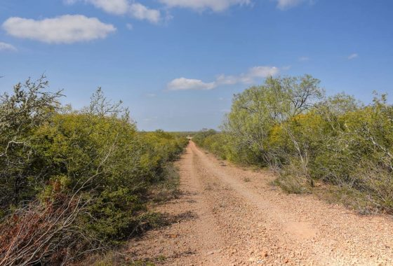 Moore Hills Ranchettes 727 Acre Ranch Frio County Image 2