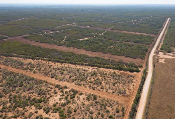 Moore Hills Ranchettes 727 Acre Ranch Frio County Image 9