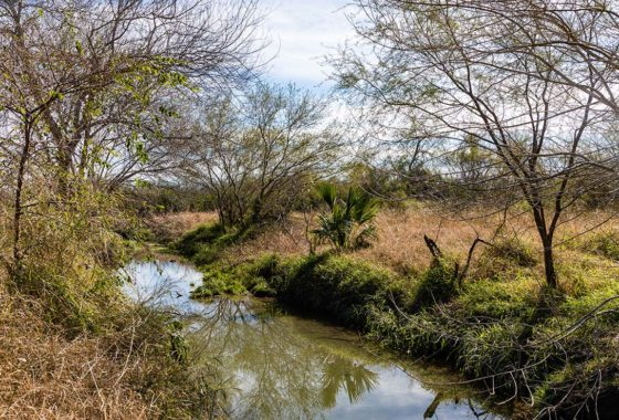 Landing Strip Ranch 175 Acre Ranch Jim Wells County Image 3