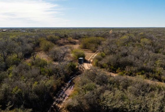 Owl Ranch 175 Acre Ranch Jim Wells County Image 2