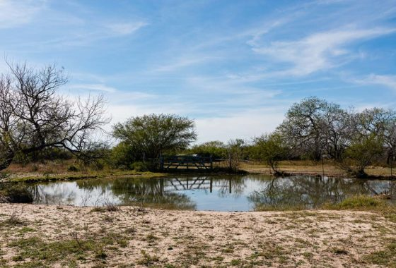 Adam's Family Ranch 654 Acre Ranch Jim Wells County Image 12