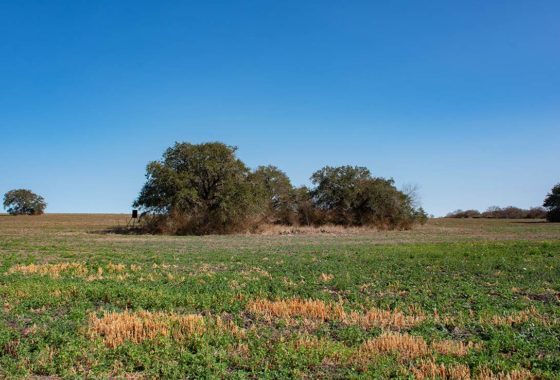 Live Oak Fields 156 Acre Ranch Live Oak County Image 1