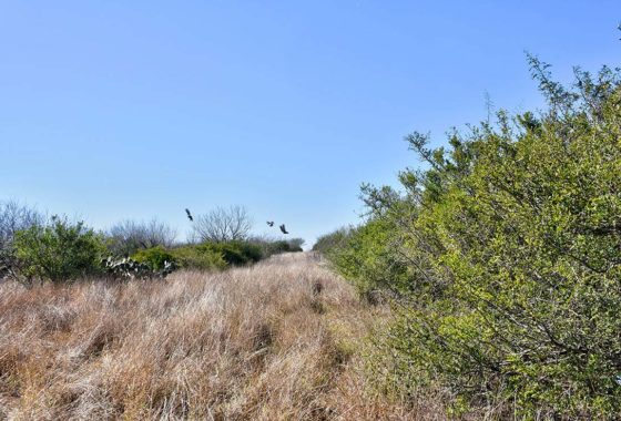 George West Ranch 80 Acre Ranch Live Oak County Image 4