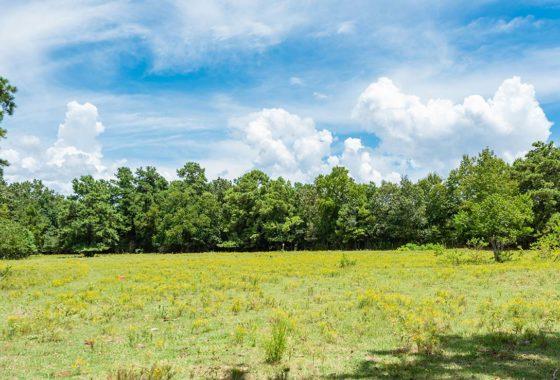 Magnolia Crossing 12 Acre Ranch Montgomery County Image 2