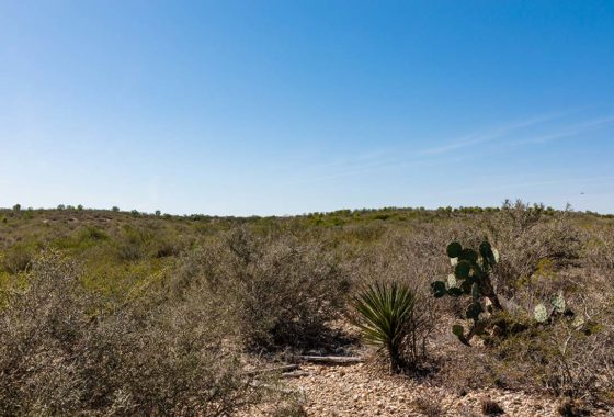Roma Ranch 630 Acre Ranch Starr County Image 10