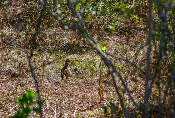 Los Cortes Ranch 100 Acre Ranch Wilson County Image 8