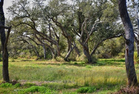RCC Development 146 Acre Ranch Aransas County Image 2