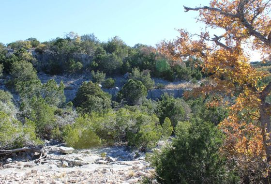 Broken Spoke Ranch 44 Acre Ranch Edwards County Image 3