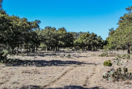 Los Encinos Ranch 68 Acre Ranch Edwards County Image 4