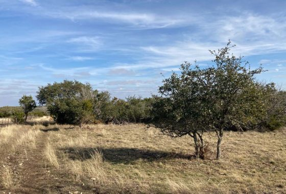 Hidden Acres Ranchette 20 Acre Ranch Real County Image 1